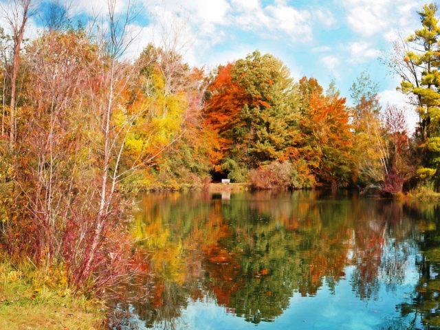 automne et réflexologie