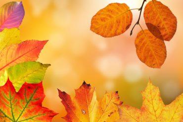 L'automne, saison de transition